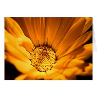 Orange and Yellow Gerbera Daisy Greeting Card