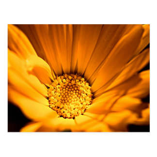 Orange and yellow gerbera daisy postcard