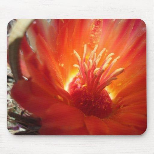 orange barrel cactus blossom mousepad