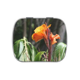 orange bird of paradise flower jelly belly tins
