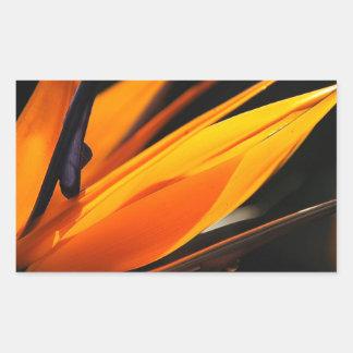 Orange Bird of Paradise Strelitzia Rectangular Sticker