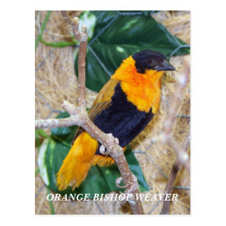 ORANGE BISHOP WEAVER POSTCARD