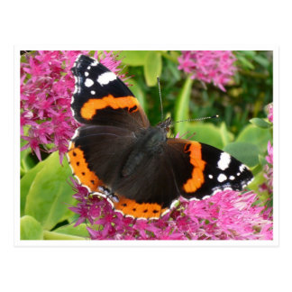 Orange Black and White Butterfly Postcard Post Card