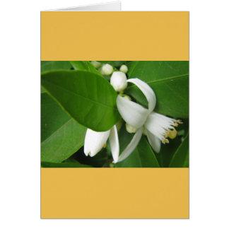 Orange Blossom Card