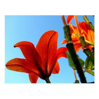 Orange Blossom Postcard