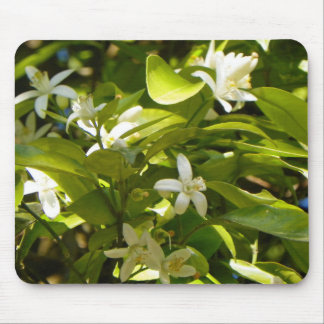 ORANGE BLOSSOMS FROM FLORIDA Mousepad