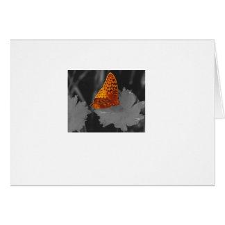 orange butterfly card