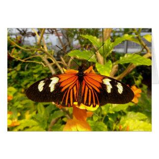 Orange Butterfly Notecard Note Card