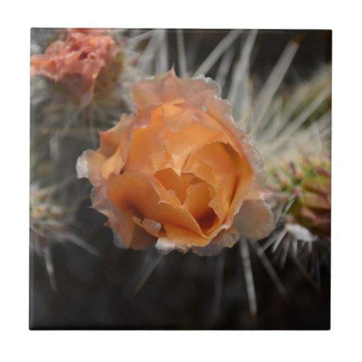 Orange Cactus Blossom Tiles