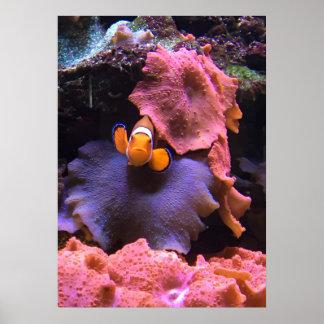Orange Clown Fish Poster