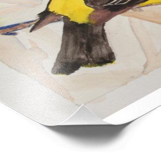 Orange Crested Tanager Art Photo