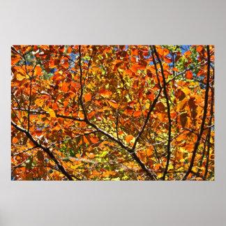 Orange Crush Autumn Leaves Posters