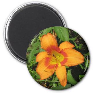 Orange Crush Daylily 6 Cm Round Magnet