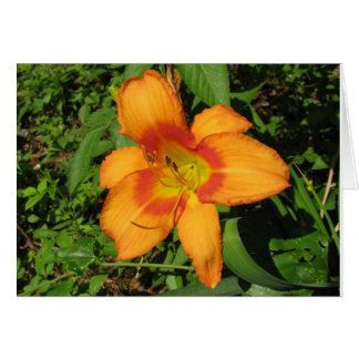 Orange Crush Daylily Greeting Card