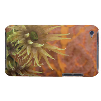 Orange cup coral barely there iPod case