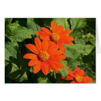 Orange Daisy Card