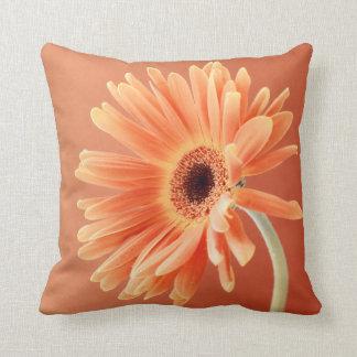Orange daisy cushions