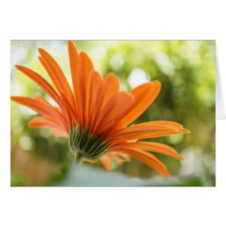 Orange Daisy Flower Card