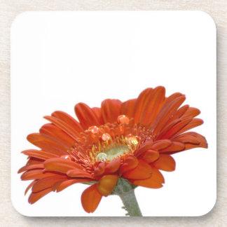 Orange Daisy Gerbera Flower Beverage Coasters