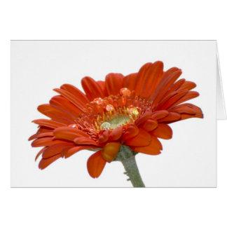 Orange Daisy Gerbera Flower Card