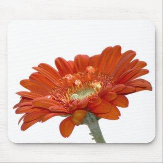 Orange Daisy Gerbera Flower Mouse Pad