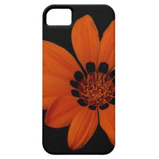 """Orange Daisy"" iPhone 5 Cases"