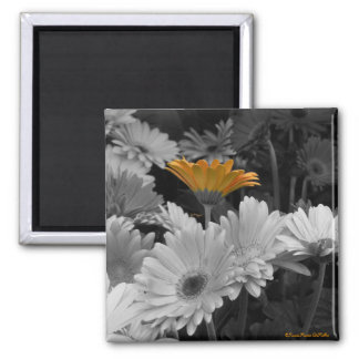orange daisy-magnet square magnet