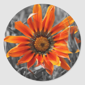 Orange Daisy Round Sticker