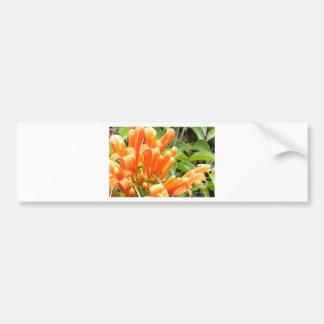 Orange Flower.jpg Bumper Sticker