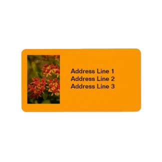 Orange Flowers in the Smoky Mountains Label