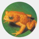 Orange Frog Round Sticker