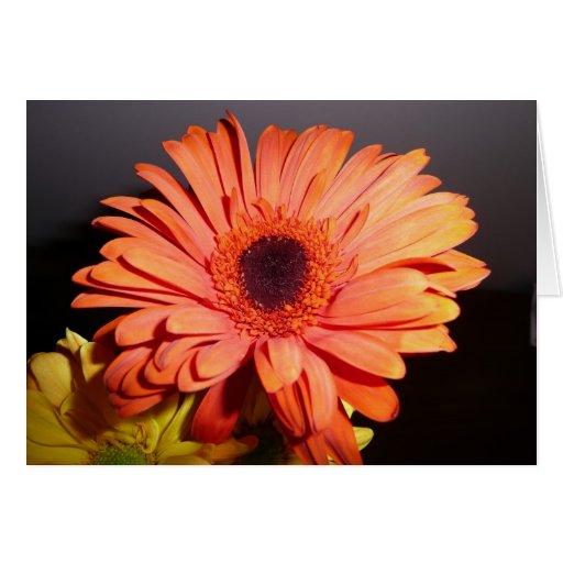 Orange Gerber Daisy Greeting Cards