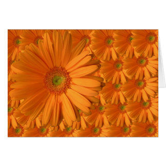 Orange Gerber Daisy Greeting Card