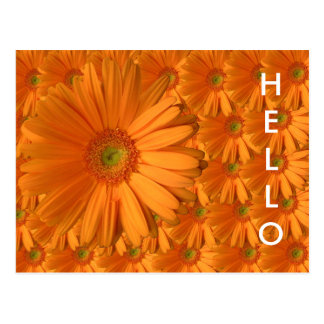 Orange Gerber Daisy Post Cards