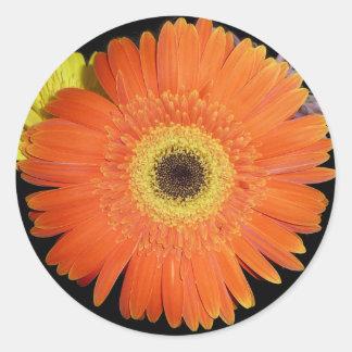 Orange Gerber Daisy Round Sticker