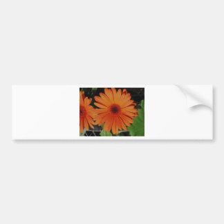 Orange Gerber gerbera Daisy daisie Bumper Stickers