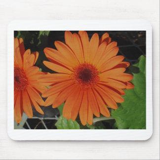 Orange Gerber gerbera Daisy daisie Mouse Pad