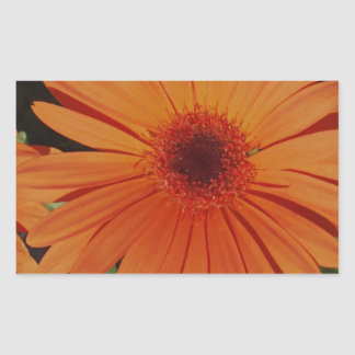 Orange Gerber gerbera Daisy daisie Rectangular Sticker
