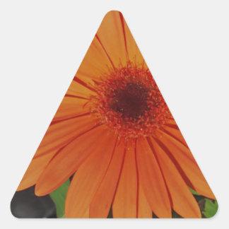 Orange Gerber gerbera Daisy daisie Triangle Sticker