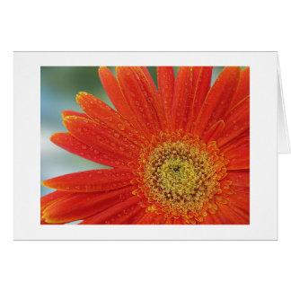 Orange Gerbera Cards