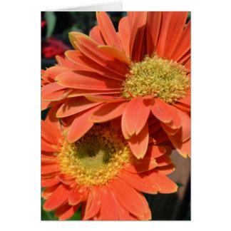 Orange Gerbera Daisies Cards
