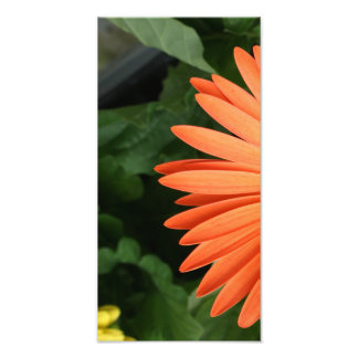 orange gerbera daisy (1 of 3) photo art