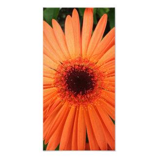 orange gerbera daisy (2 of 3) photographic print