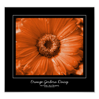 Orange Gerbera Daisy Black Border Poster