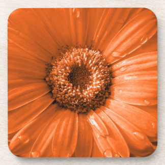 Orange Gerbera Daisy Coaster
