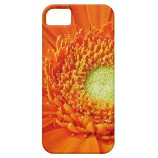 Orange Gerbera Daisy Flower iPhone 5 Covers