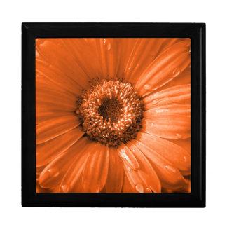 Orange Gerbera Daisy Gift Boxes