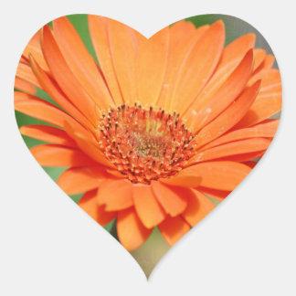 Orange Gerbera Daisy Heart Sticker