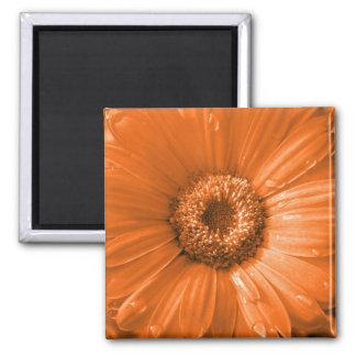 Orange Gerbera Daisy Magnet