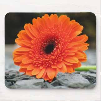 Orange Gerbera Daisy Mouse Pad